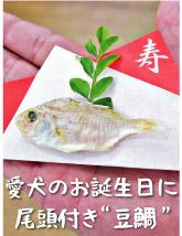 愛媛県産 豆鯛